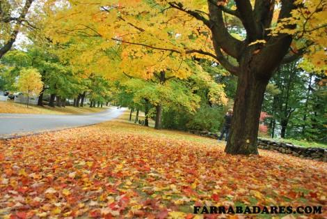 Adoro essa foto!! - outono em Bennington, VT